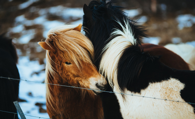 Little Visuals - Horses kinship